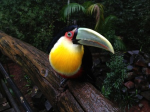 Another toucan, cute bib